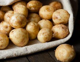 Ринок молодої картоплі в Україні обвалений