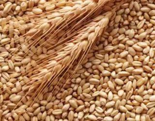 У 2017/18 МР Україна експортувала зерна на $6,4 млрд