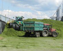 Вартість корму для корів напряму залежить від вмісту сухої речовини в ньому