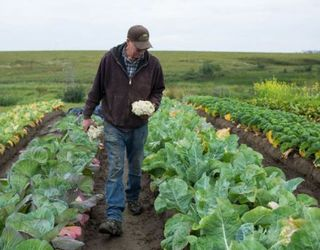Яким сімейним фермерським господарствам на руку зміни в оподаткуванні