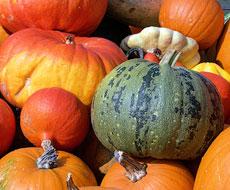Пасинкування забезпечує оптимальне плодоношення гарбузів