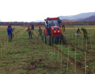 У Криму висадили понад 700 га виноградників