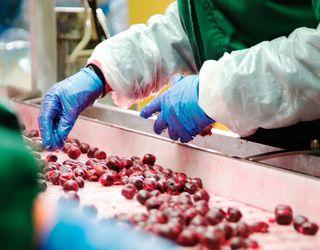 T.B.Fruit має намір збудувати третій завод із переробки яблук та ягід у Польщі