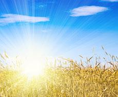 «Астарта» зібрала 250 тис. тонн ранніх зернових