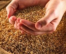 Grain Alliance отримав хороший врожай ранніх зернових