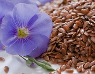 Протруювання насіння дозволяє захистити посіви льону від хвороб