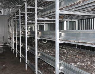 На Київщині закривається грибна ферма