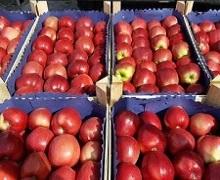 Україна працює над відкриттям ринків чотирьох азійських країн для експорту яблук і лохини