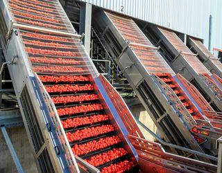 Agrofusion запустила третій завод із переробки томатів на повну потужність