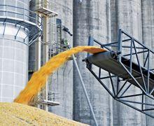 UkrLandFarming відрив додаткову лінію приймання зерна на Житомирському елеваторі