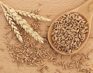 Grain Alliance зібрав 700 тонн органічної спельти