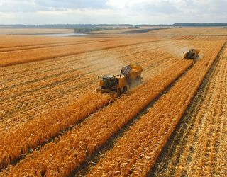 В Україні стартували жнива кукурудзи