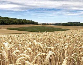 На Луганщині продали права оренди на 125 га сільгоспземель