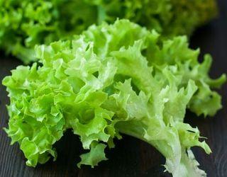 Україна вже заробила на експорті салату-латуку і цикорію у 2,5 раза більше, ніж за весь 2017 рік