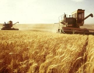 В Україні зібрано майже 35 млн тонн зерна
