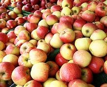 Експорт українських яблук зріс усемеро
