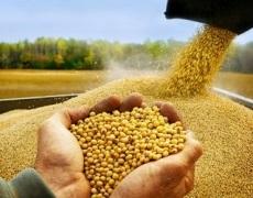 Аграрії зібрали сою з половини запланованих площ