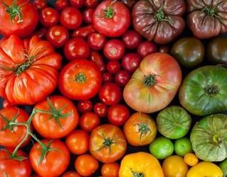 Найбільш стійкі до хвороб сорти овочів мають гірший смак
