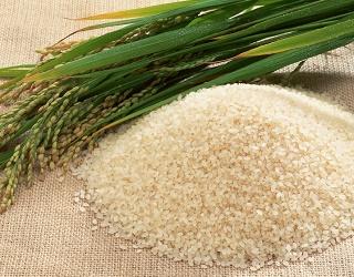 Світове виробництво рису цього року зросте на 1,3%