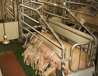 Growket і «Зернова Столиця-Інжиніринг» спільно розроблятимуть тваринницькі комплекси преміум-класу