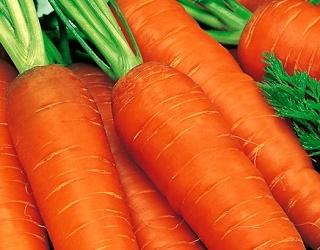 Морква з розсади гірше зберігається