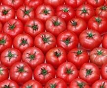 Гібриди томатів можуть мати стійкість лише до 3-4 патогенів