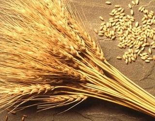 Аграрії зібрали понад 45 млн тонн зерна