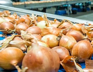 Каховський завод розробив установку для максимально механізованого очищення цибулі