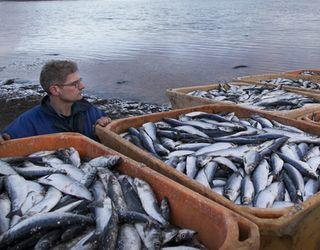 Українці у 2017 році споживали на 12,5% більше риби та рибних продуктів