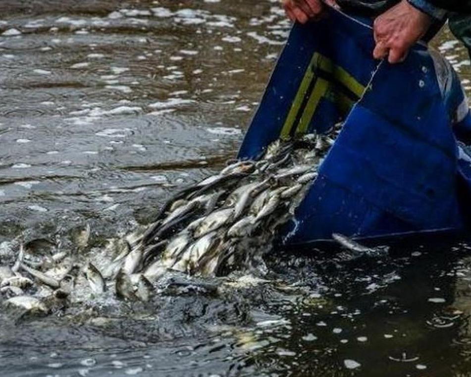 У Каховське водосховище випустили понад 6,4 тонни малька коропа, товстолобика й білого амура