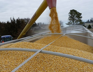 Відвантаження кукурудзи з морських портів зросло втричі