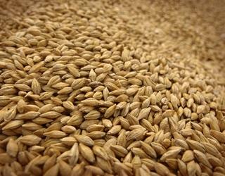 З початку сезону експортовано 13,3 млн тонн зерна