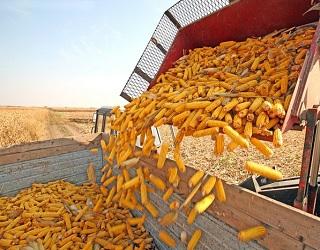 Зібрано майже 59 млн тонн зерна