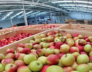 На Херсонщині заклали на зберігання 11 тис. тонн яблука та інших фруктів