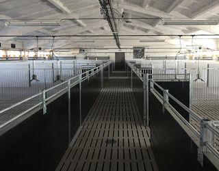 Правильна теплоізоляція свинокомплексу подовжить термін експлуатації будівель