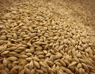 Україна вдвічі скоротила експорт пшениці до Бангладеш