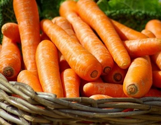 У сховищах біла гниль на моркві розвивається вогнищами