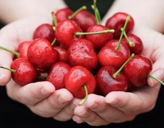 За стійкість плодів черешні до розтріскування відповідає кальцій