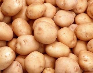 Активна вентиляція у сховищі допомагає запобігти ураженню картоплі дитиленхозом
