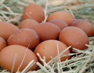 Як запобігти появі зім'ятого яйця у несучок