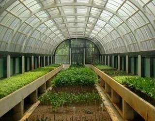 Які овочеві культури перспективно вирощувати в теплицях