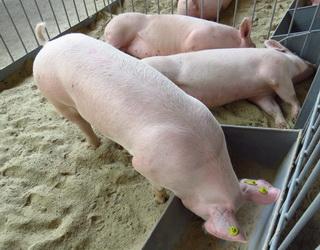 На мінеральний склад кормів для тварин впливає територія, де ростуть кормові культури