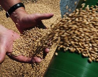 З початку сезону експортовано 24,1 млн тонн зерна