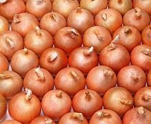 У грудні Україна імпортувала рекордний обсяг цибулі