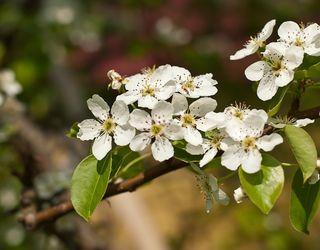 «Агро Еталон» закладе 60 га садів яблуні та груші