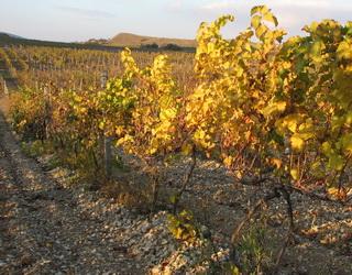 Стрімкість схилу впливає на розміщення кореневої системи винограду