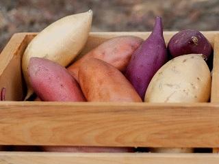 Краще вирощувати сорти батату середнього розміру з більшою кількістю бульб