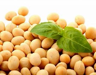 Україна вперше експортувала сою до Алжиру