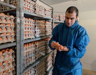 Україна погодила ветсертифікати на експорт м'яса птиці, яєць і яєчних продуктів до Сінгапуру