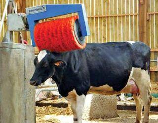Щітка-чесалка важлива коровам не менше за їжу